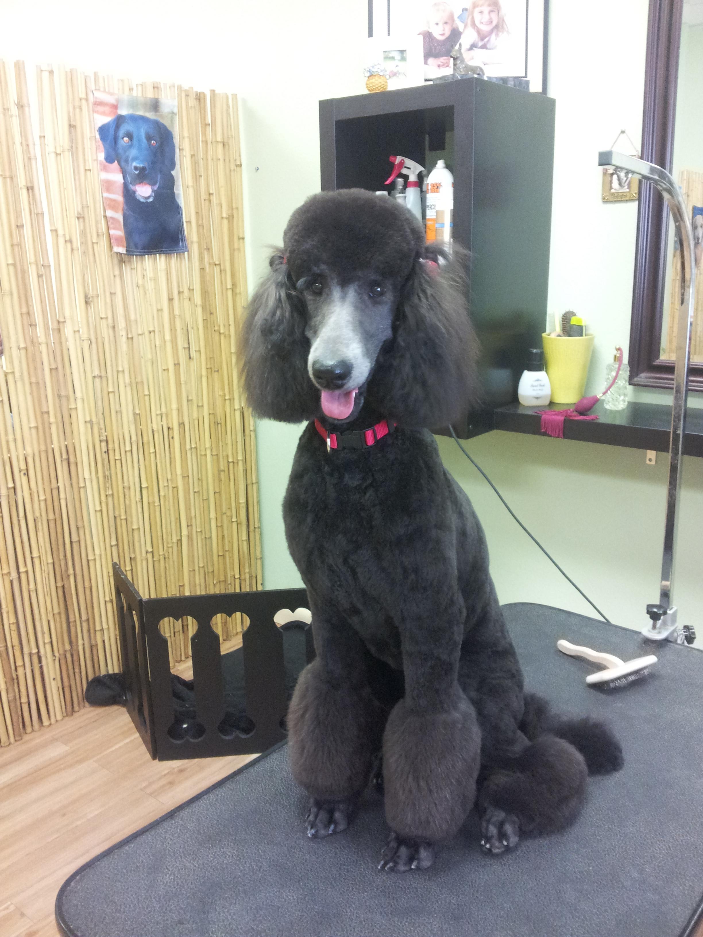 Divine Dog Grooming Salon